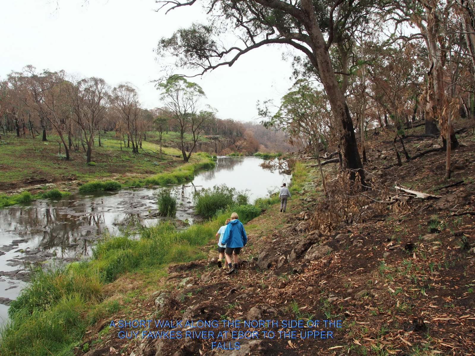 A SHORT WALK ALONG THE NORTH SIDE OF THE GUY FAWKES RIVER AT EBOR TO THE UPPER FALLS
