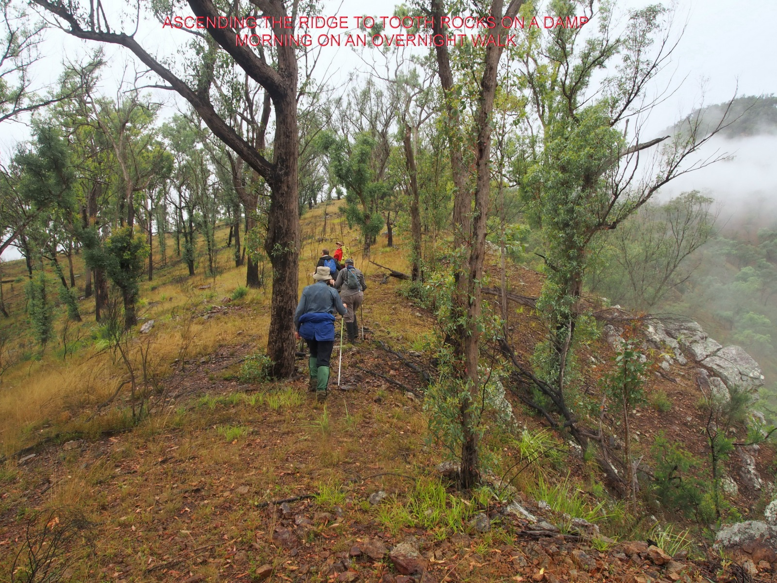 ASCENDING THE RIDGE TO TOOTH ROCKS ON A DAMP MORNING ON AN OVERNIGHT WALK